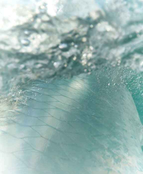 The scales of a tarpon - fishing outdoor photography