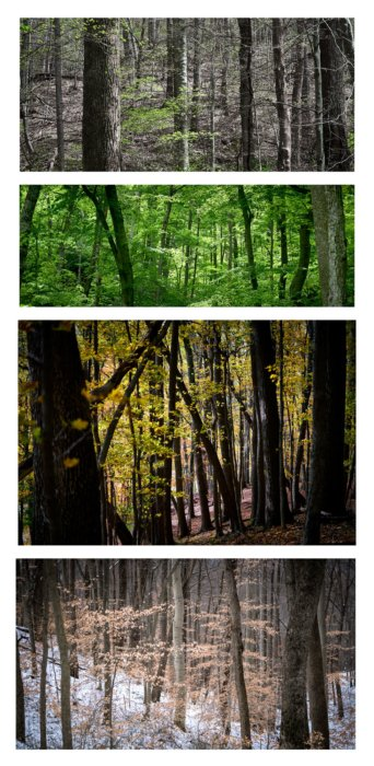 Four Seasons Images of the Edge of Appalachia Preserve trees