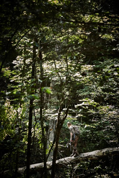 A hunter walking on a downed tree bridge in a thick forest