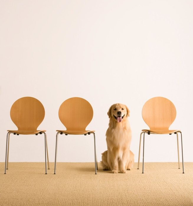 Dog sitting next to chairs