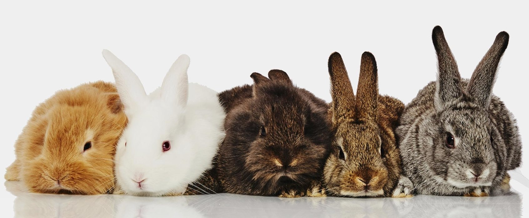 Bunnies in a row