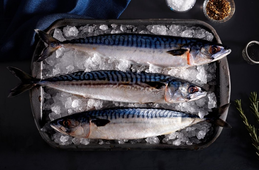 Raw fish on ice in a tray on dark background