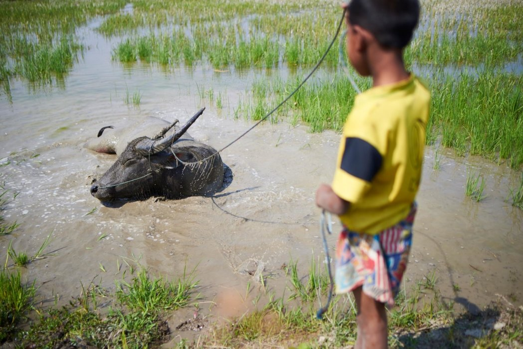 Travel photo of a kid with a water buffalo