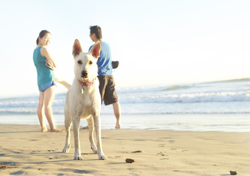 Lifestyle shot of a family with a dog on the beach- lifestyle photography
