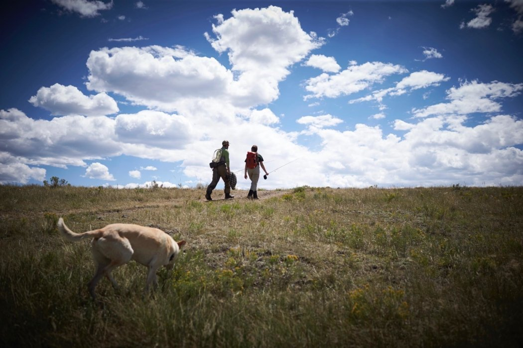 Men walking through a field with dogs