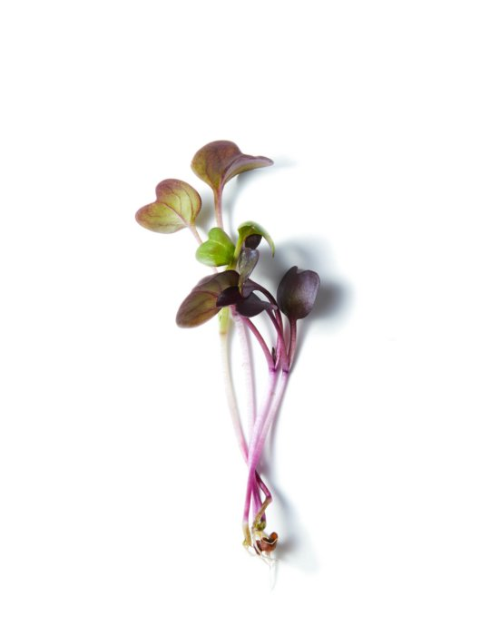 small plant sprouts - - Raw Food Photography