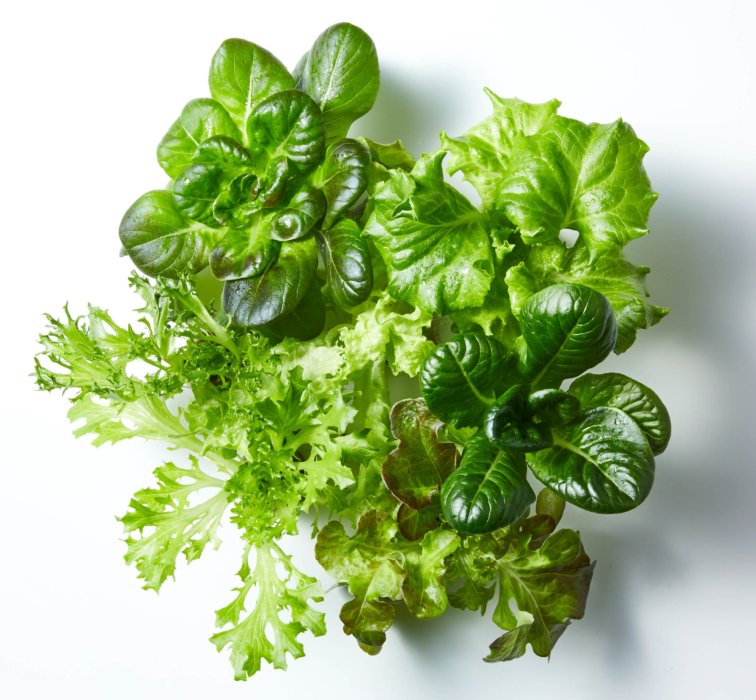 Fresh leafy greens on a white background - Raw Food Photography