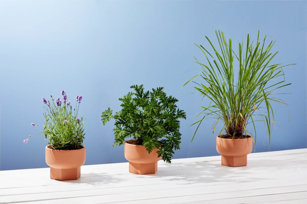 Three plants on a blue background - product photography