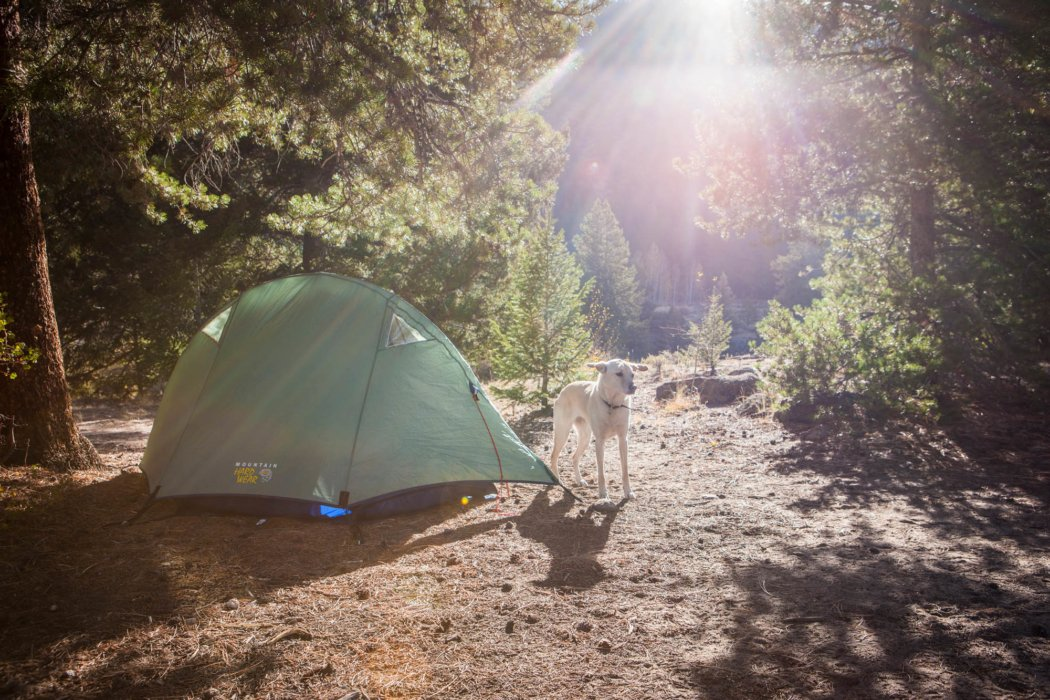 A dog coming out of a tent at sunset