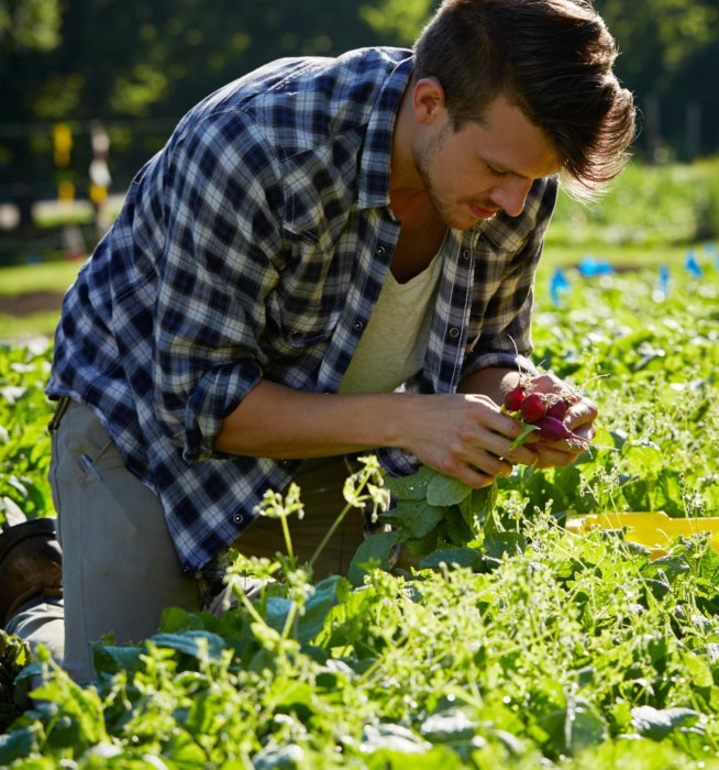 Man worker outside picking out fresh food radish