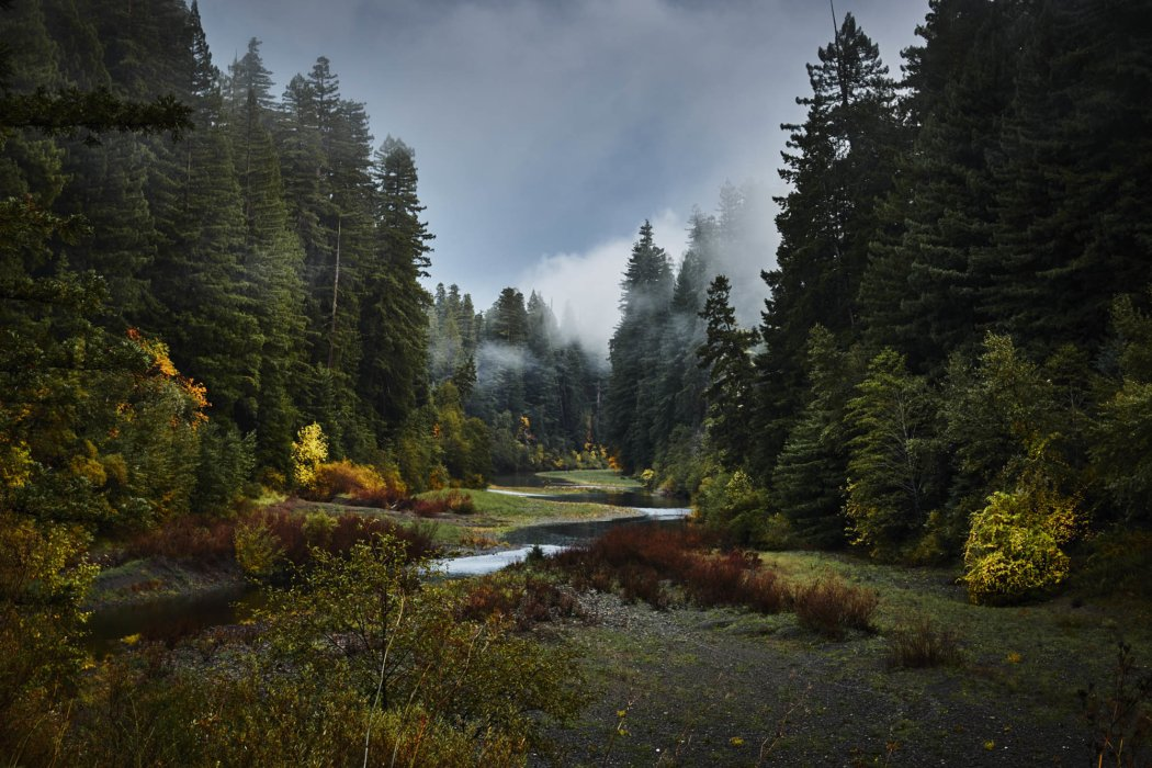 A misty beautiful pine-forest scene with a river running through it