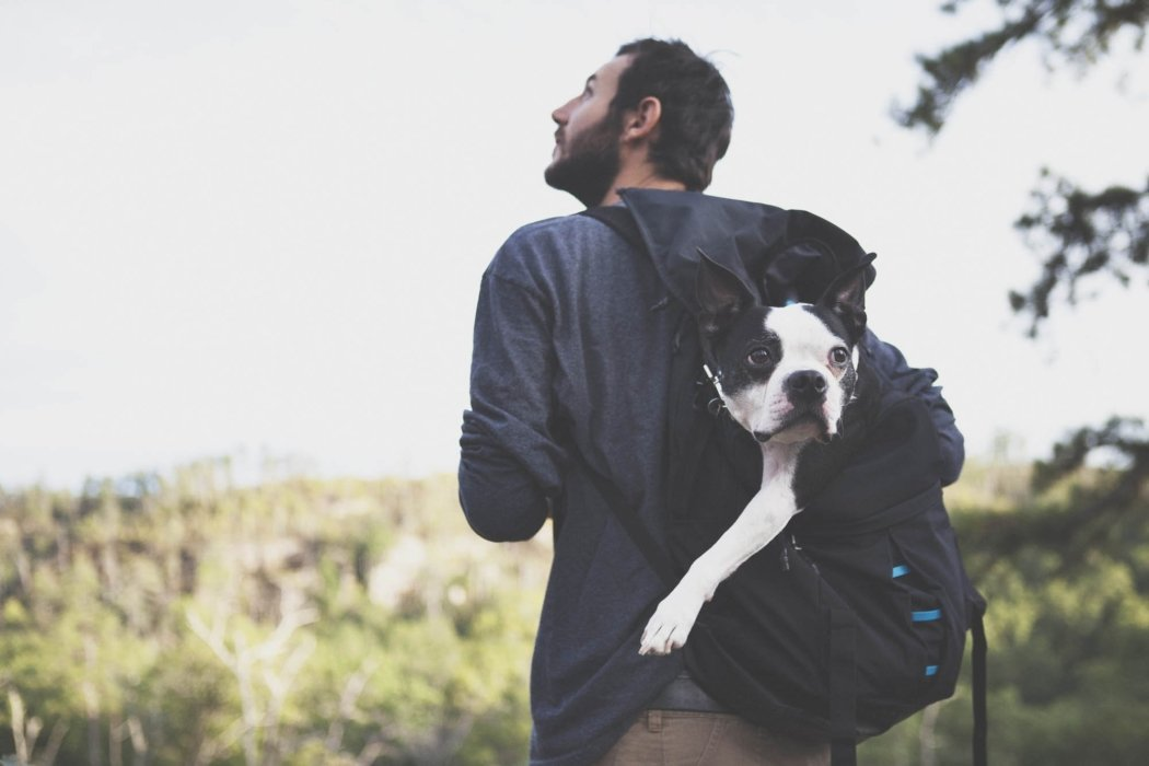 A man hiking with his dog in the moutains while dog in in backpack