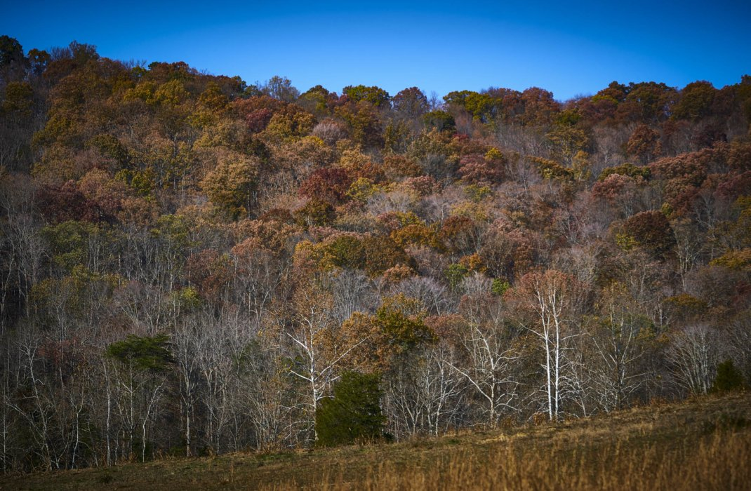 A ridge of autumn trees with many colors - nature photography