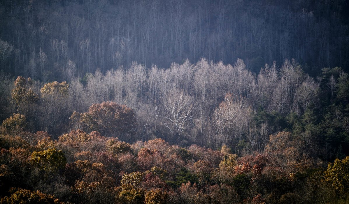 Trees on three ridges in autumns