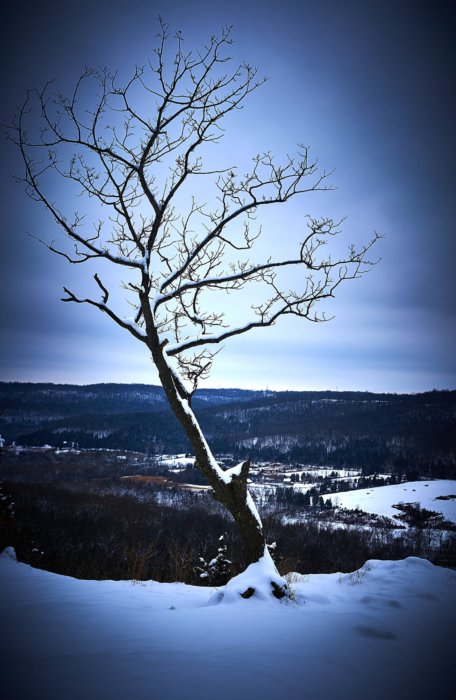 A cold tree in the dead of winter looking cold - Nature Photography